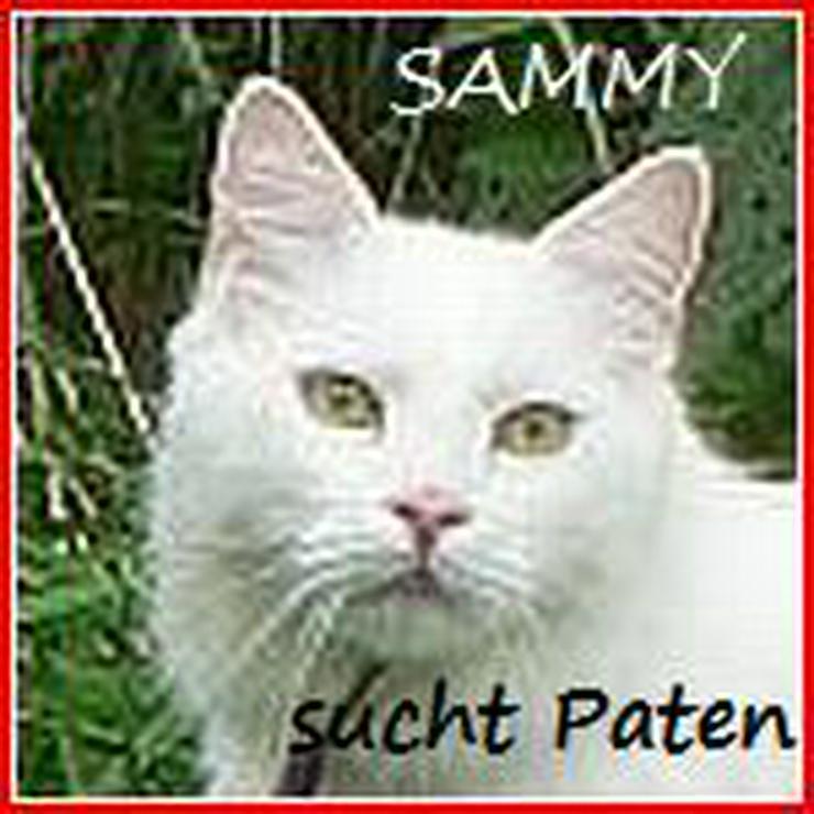 Türkisch Van SAM sucht Paten