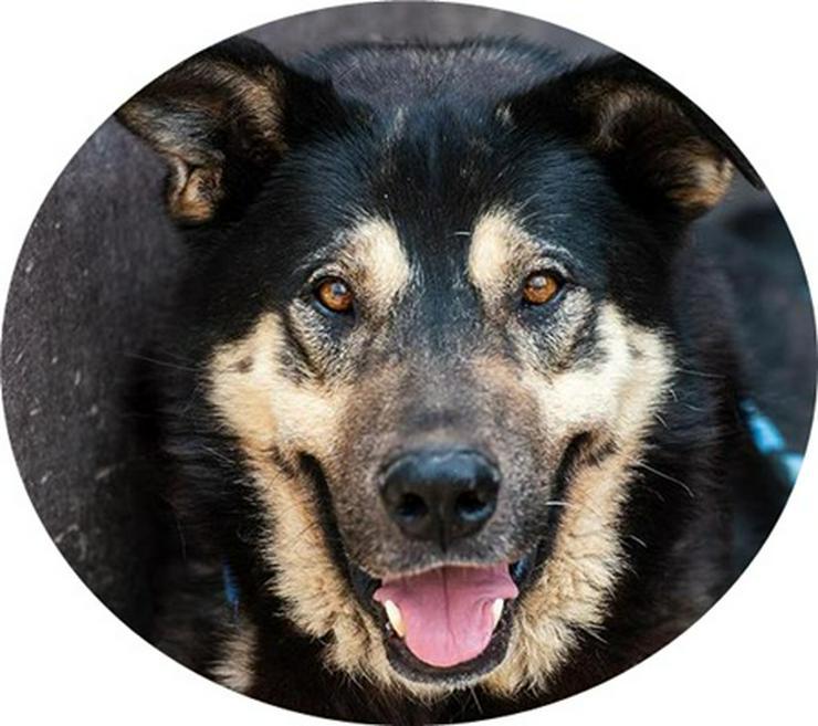 FÁRÁO - geb: 2012 - DRINGENDER NOTFALL! (aus dem Tierschutz)