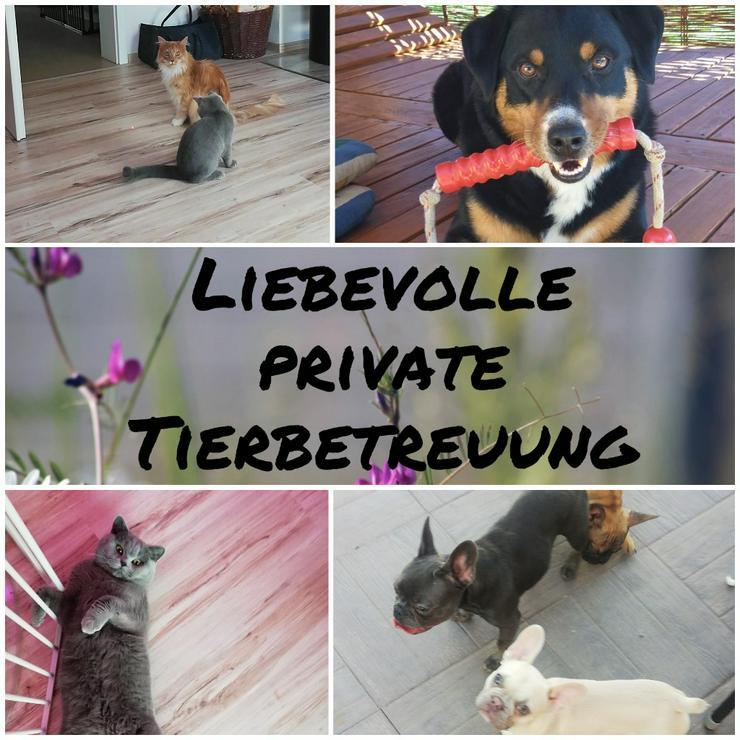 Liebevolle private Tierbetreuung/Hundesitting/Katzensitting usw..