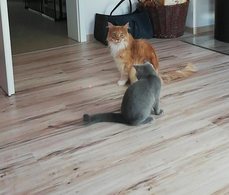 Bild 3: Liebevolle private Tierbetreuung/Hundesitting/Katzensitting usw..