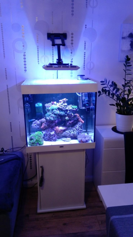Bild 5: Meerwasserbecken Hobbyaufgabe 200 Liter