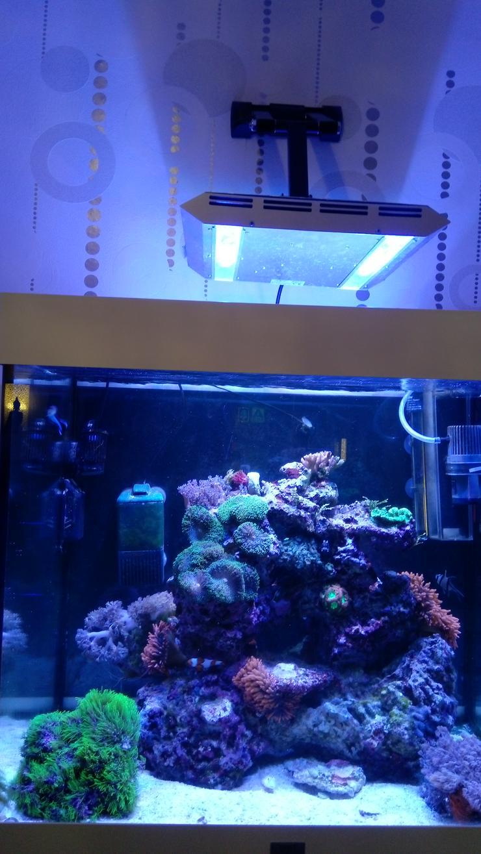 Bild 6: Meerwasserbecken Hobbyaufgabe 200 Liter
