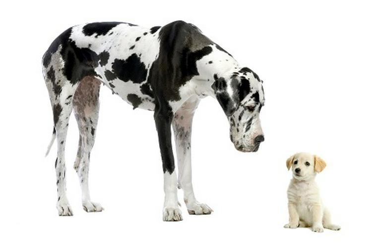 Liebevolle Tierkommunikation