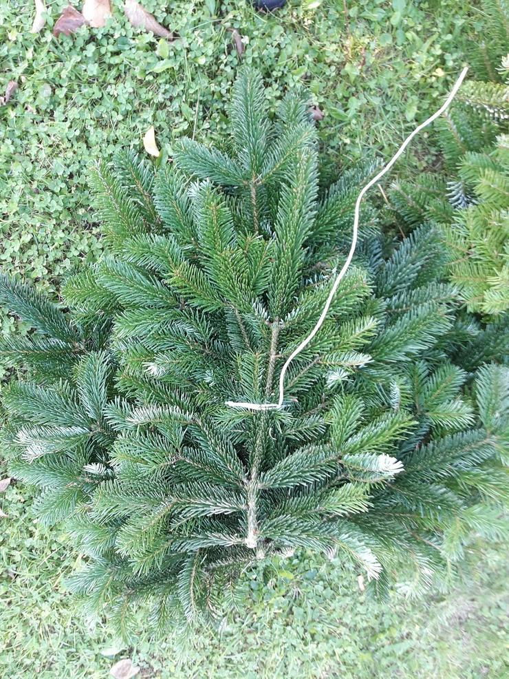 Bild 2: Zweige der Nordmanntanne für Garten und Dekoration, Bündel 5 kg