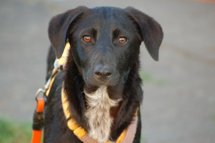 Leon - Zuhause gesucht - Mischlingshunde - Bild 1