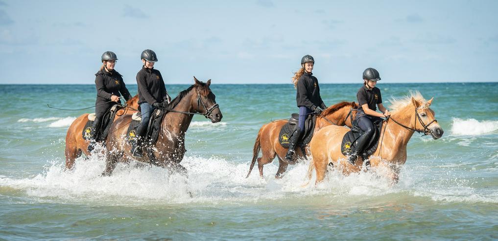 Bild 4: Verkäufer (m/w) mit Pferdeerfahrung