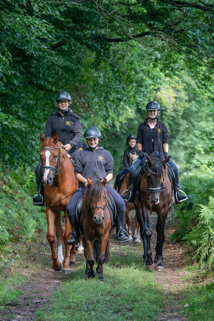 Bild 5: Verkäufer (m/w) mit Pferdeerfahrung