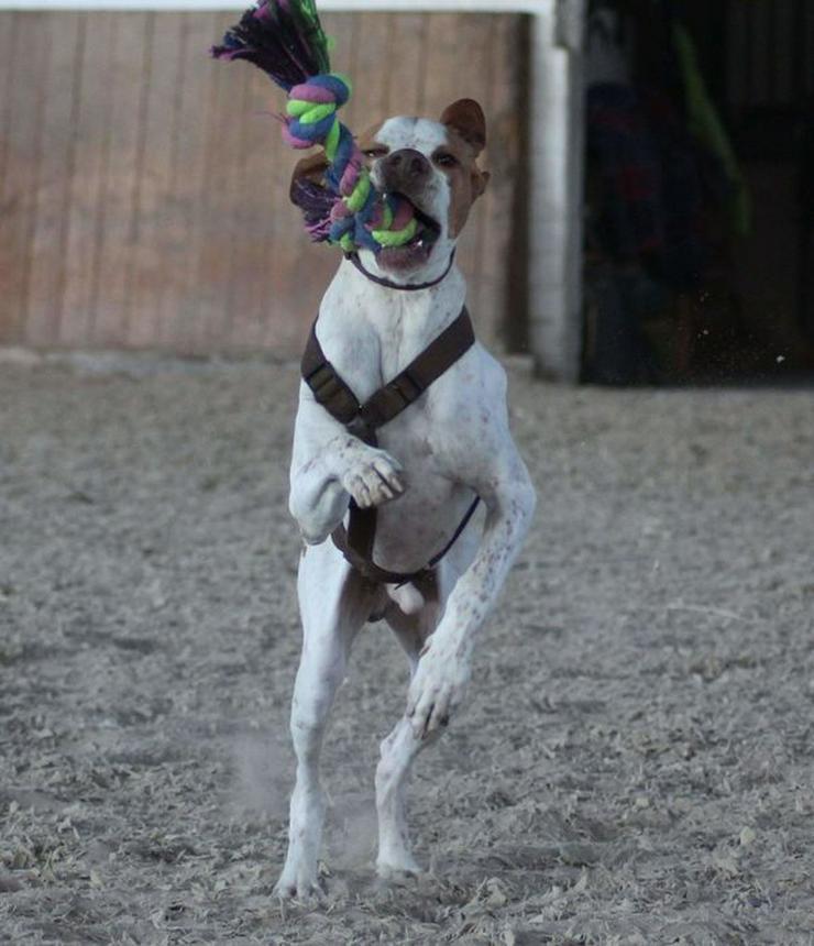 Bild 6: Leo, ein Sonnenscheinhund