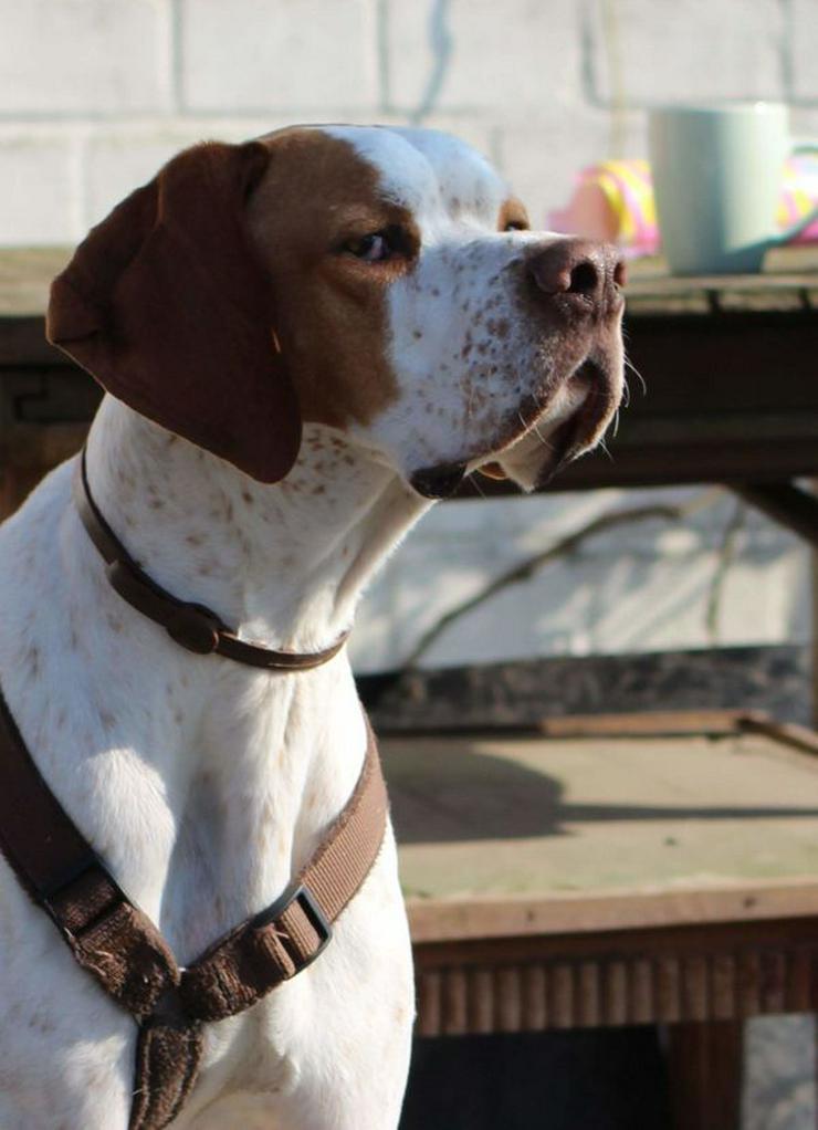 Bild 3: Leo, ein Sonnenscheinhund