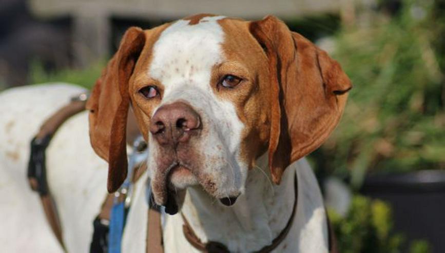 Bild 5: Leo, ein Sonnenscheinhund