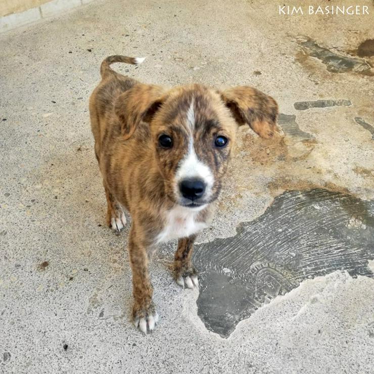 Süße Mischlingsdame Kim Basinger - Mischlingshunde - Bild 1