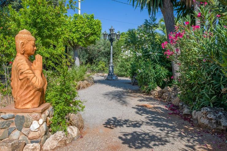 Bild 17: Finca 4600 qm Grundstück mit 2 Häuser und 2 Apartments zu verkaufen