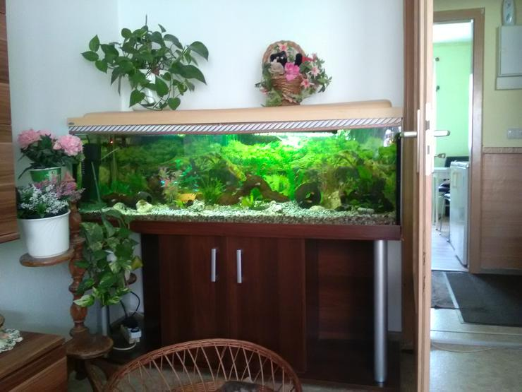 Awuarium 375 Liter abzugeben