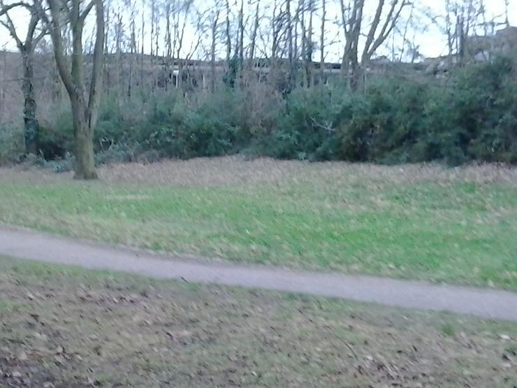 Bild 3: 2 Zimmer Whg Duisburg bei helios