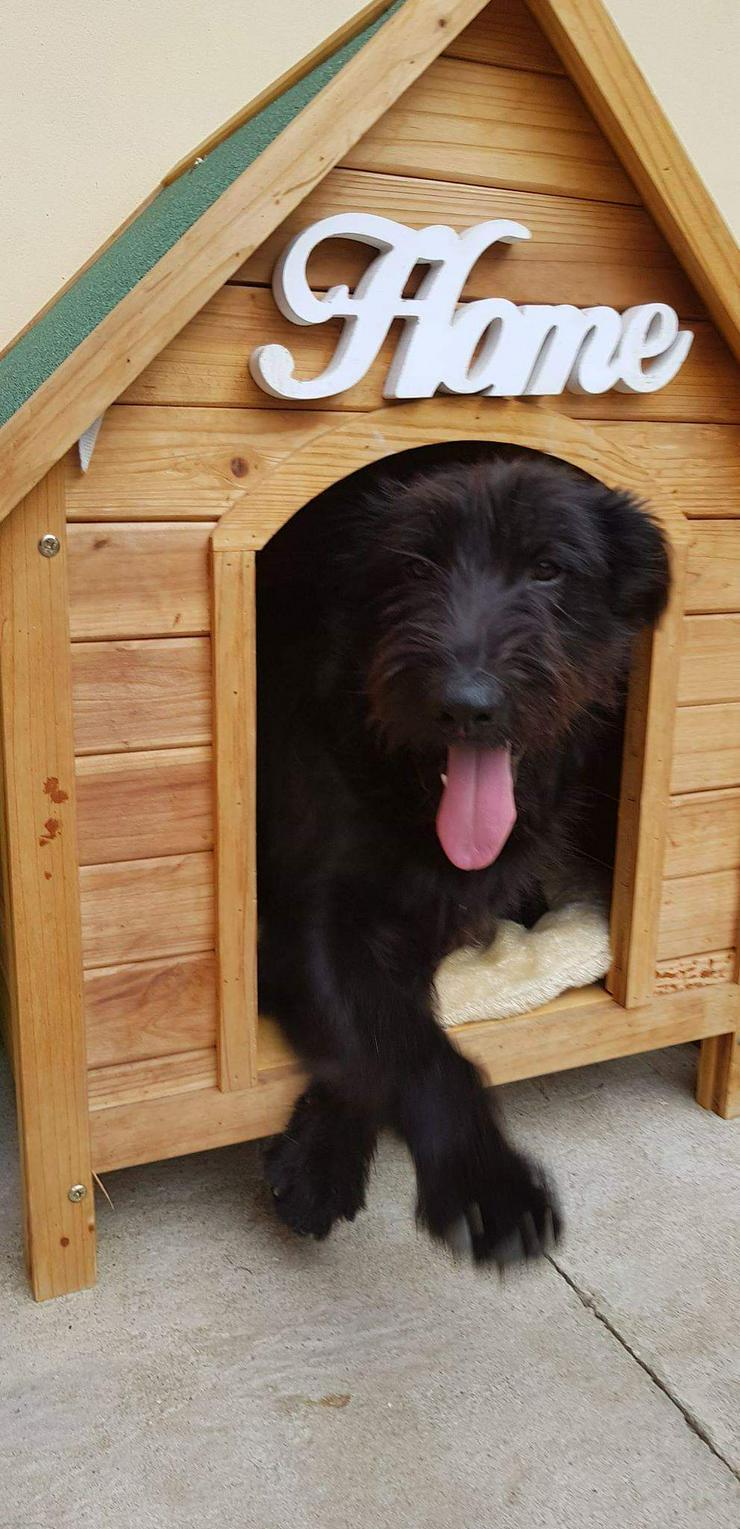 Alfi - Zuhause oder Pflegestelle gesucht - Mischlingshunde - Bild 1