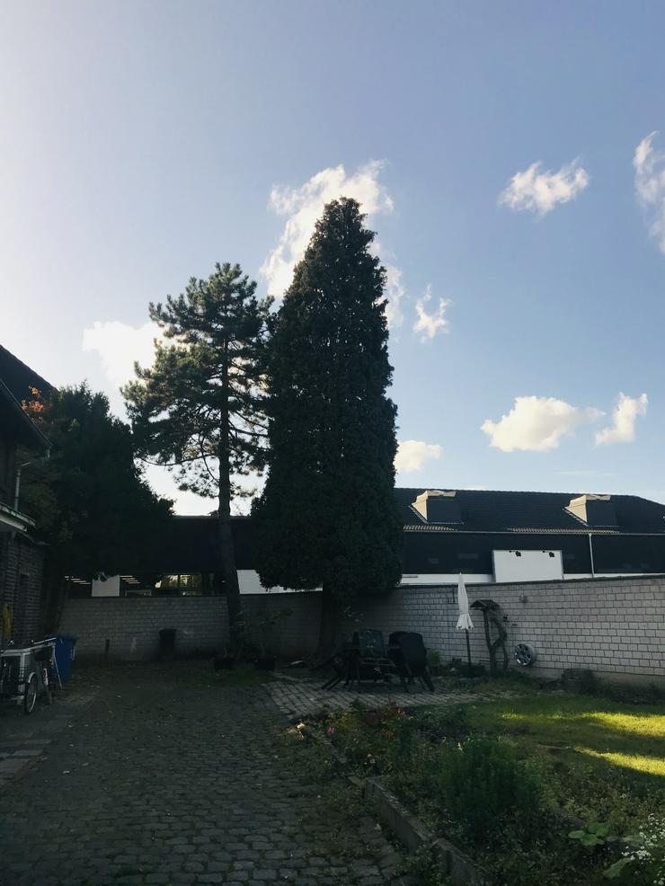 Bild 3: Pflastersteine, Fenster, Türen, Böden, Decken, Treppen, Bäume