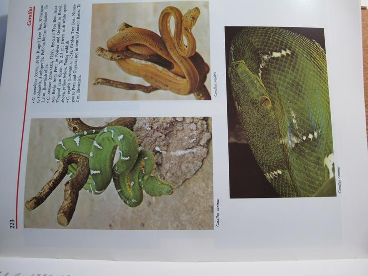 Bild 3: Atlas of Reptiles and Amphibians for thi Terrarium