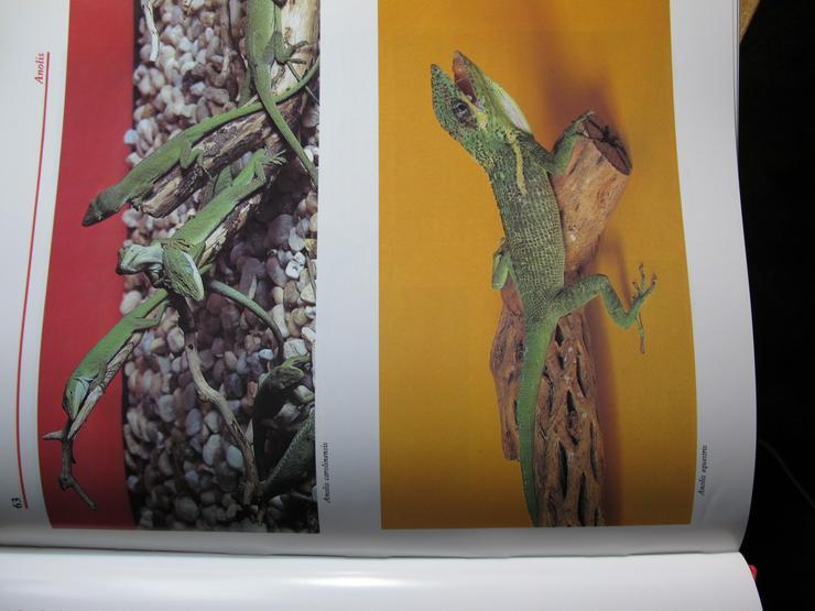 Bild 5: Atlas of Reptiles and Amphibians for thi Terrarium