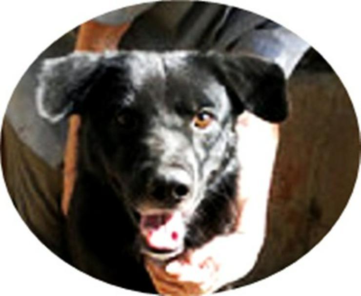 RIGO - 50 cm - BRAUCHT HILFE!  (aus dem Tierschutz) - Mischlingshunde - Bild 1