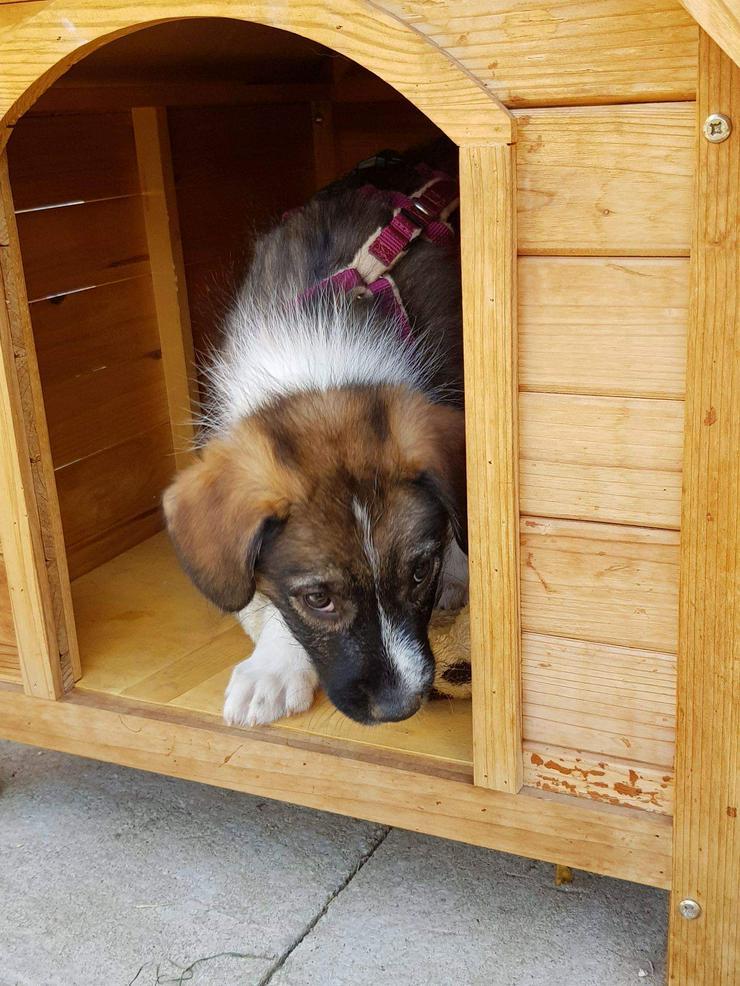 Bild 5: Filou möchte nicht im Tierheim aufwachsen