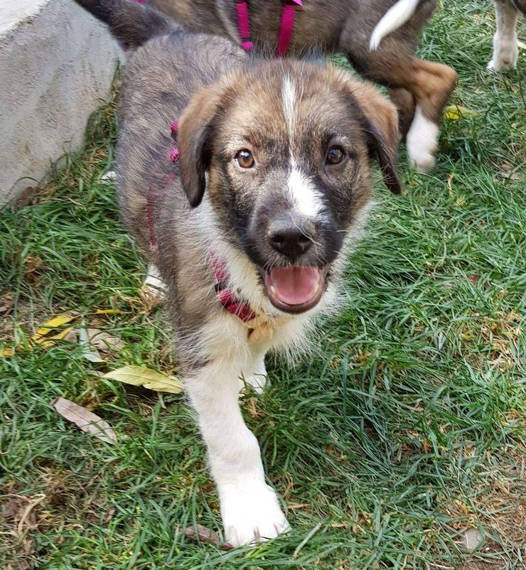 Filou möchte nicht im Tierheim aufwachsen  - Mischlingshunde - Bild 1