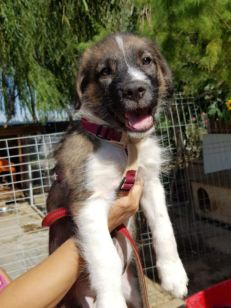 Bild 4: Filou möchte nicht im Tierheim aufwachsen