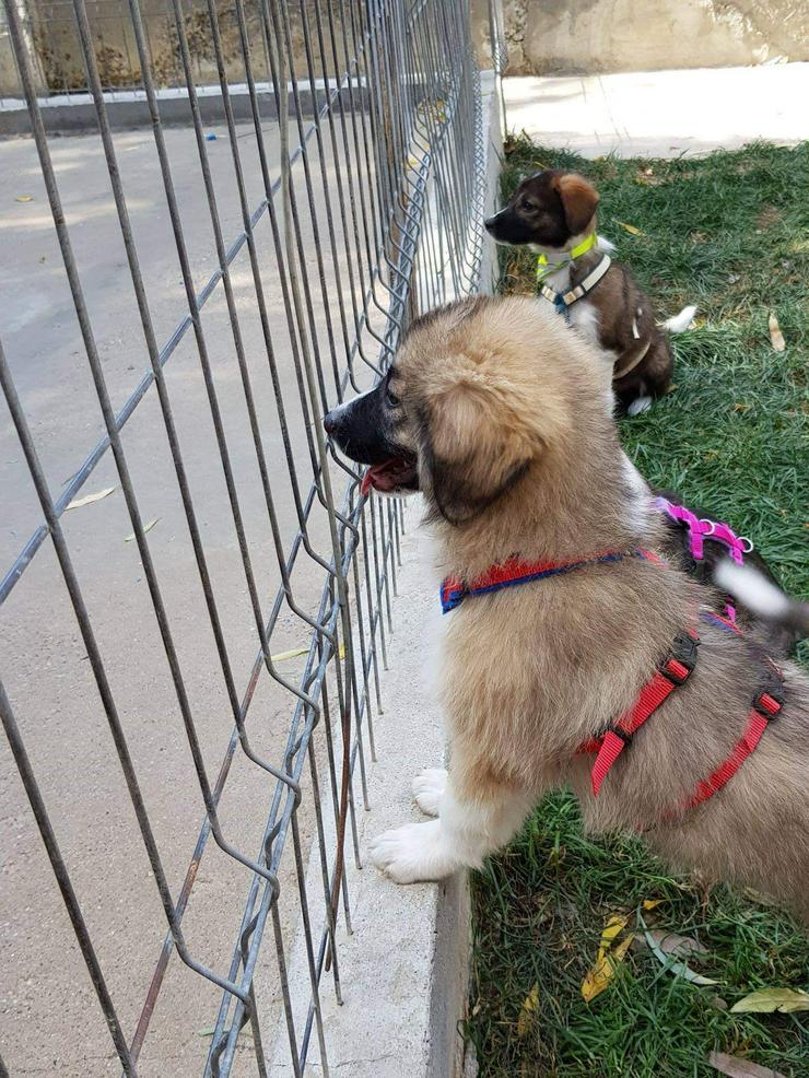 Bild 3: Teddy wartet auf seine Menschen