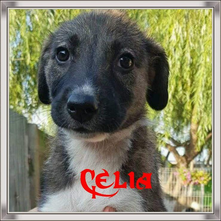 Bild 6: Celia wartet im Tierheim