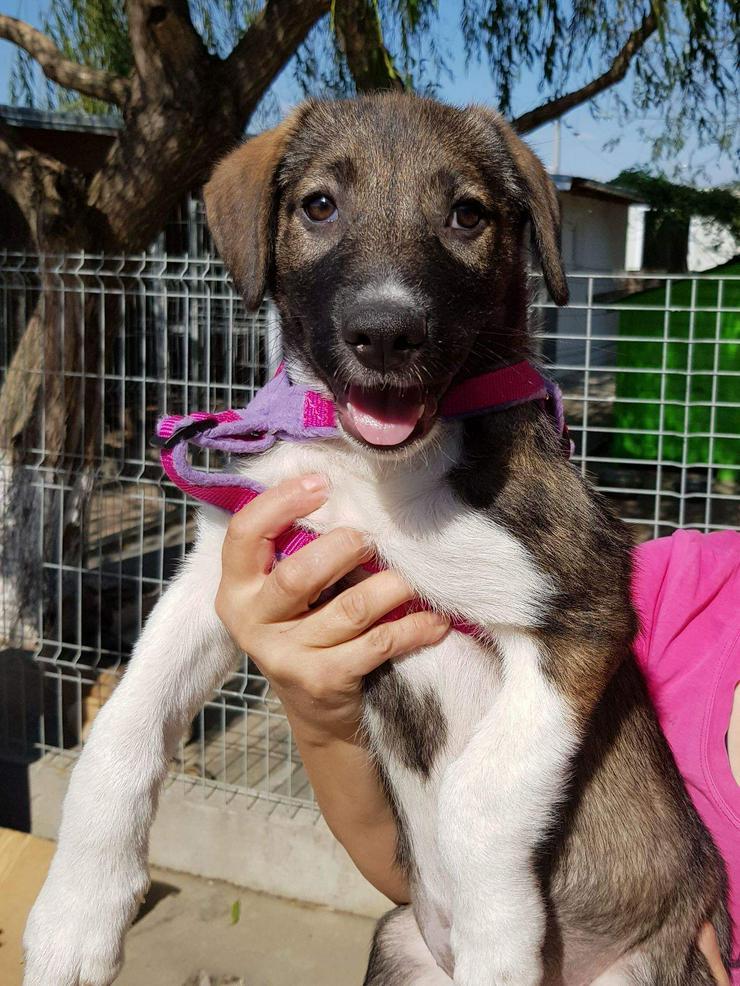 Celia wartet im Tierheim  - Mischlingshunde - Bild 1
