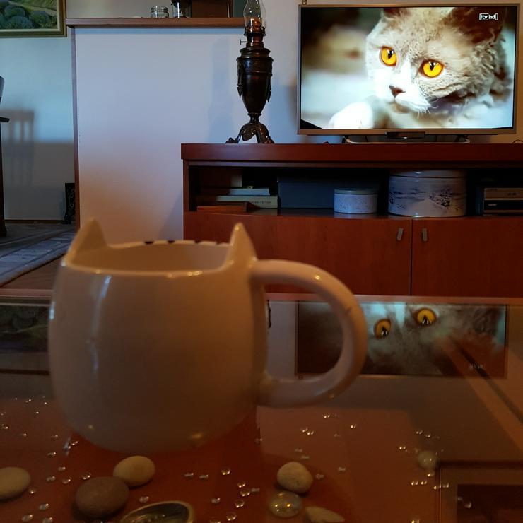 Bild 3: Katzentasse