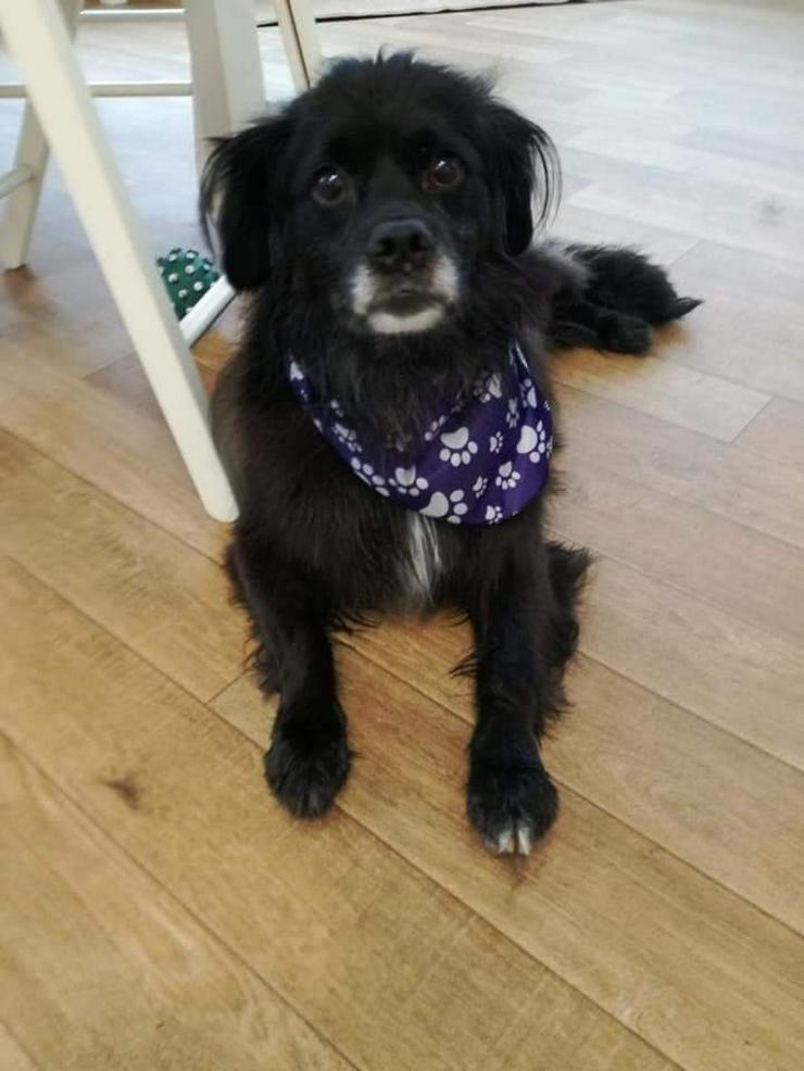 Moritz, ein Sonnenschein sucht Zuhause - Mischlingshunde - Bild 1