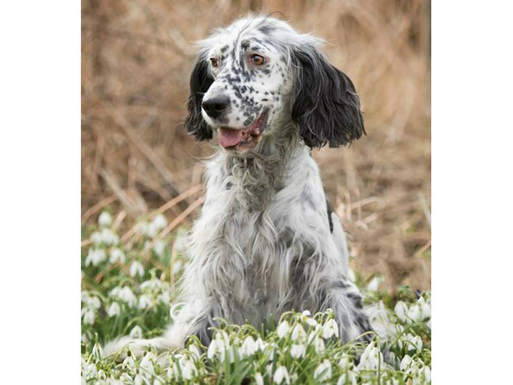 selli sucht ihr Zuhause  - Mischlingshunde - Bild 1