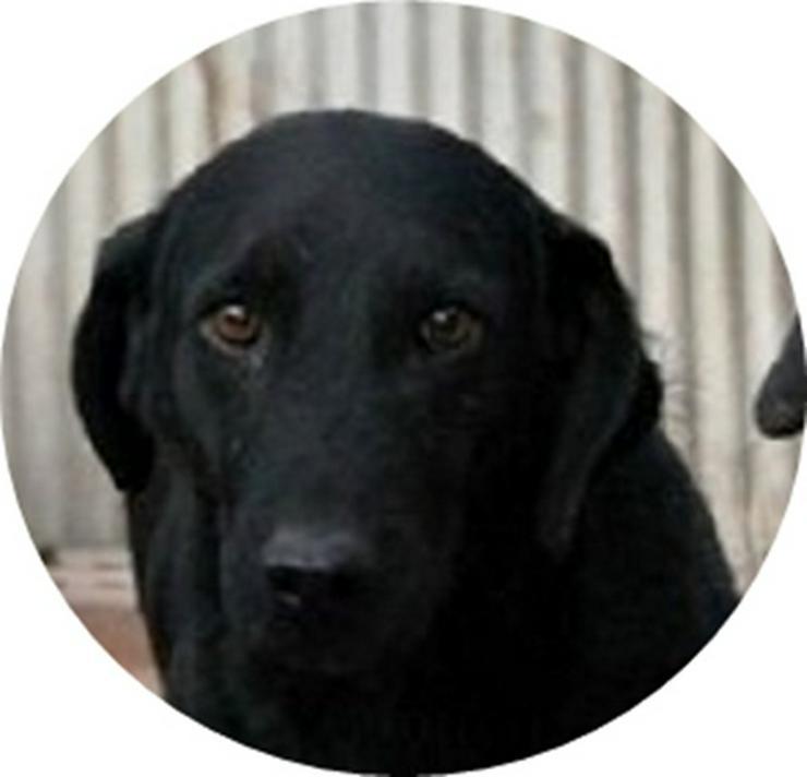 NAGY BOGI - DRINGENDER NOTFALL! (aus dem Tierschutz) - Mischlingshunde - Bild 1