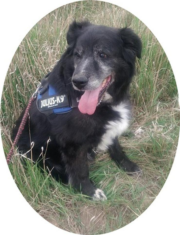 VEZER - 65 cm - DER MENSCHENFREUND! (aus dem Tierschutz) - Mischlingshunde - Bild 1