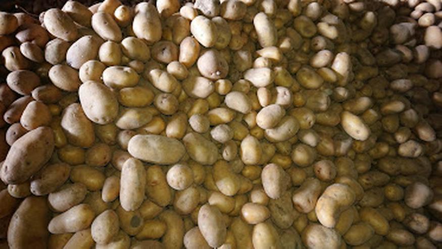 Bild 2: Kartoffeln aus integrierter Landwirtschaft