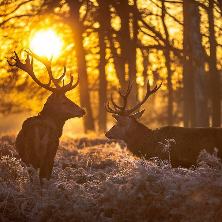 Jagdschein an 7 Wochenenden oder in 16 Tagen