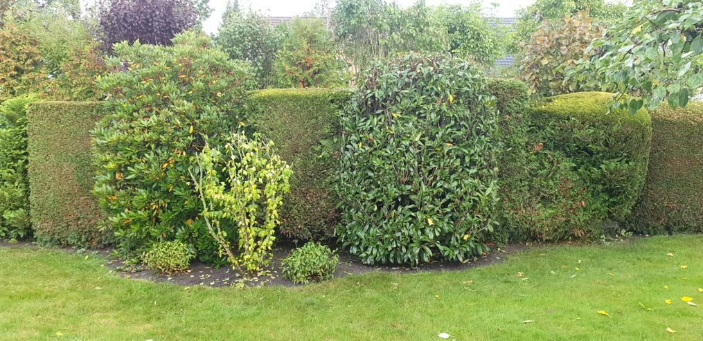 Bild 3: Gartenpflege Gärten Gartenarbeiten Heckenschnitt