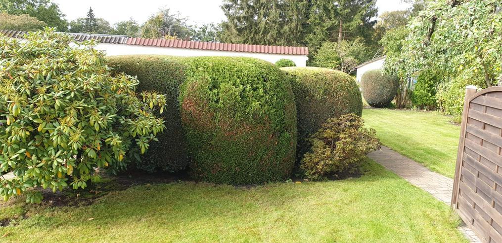 Bild 2: Gartenpflege Gärten Gartenarbeiten Heckenschnitt
