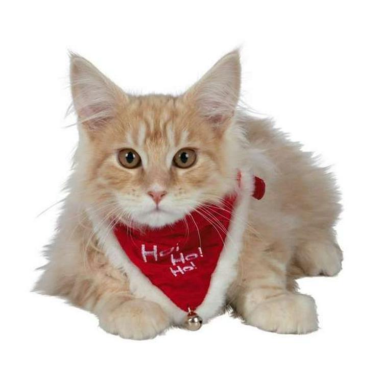 Bild 14: Heimtierzubehör für alle Haustiere