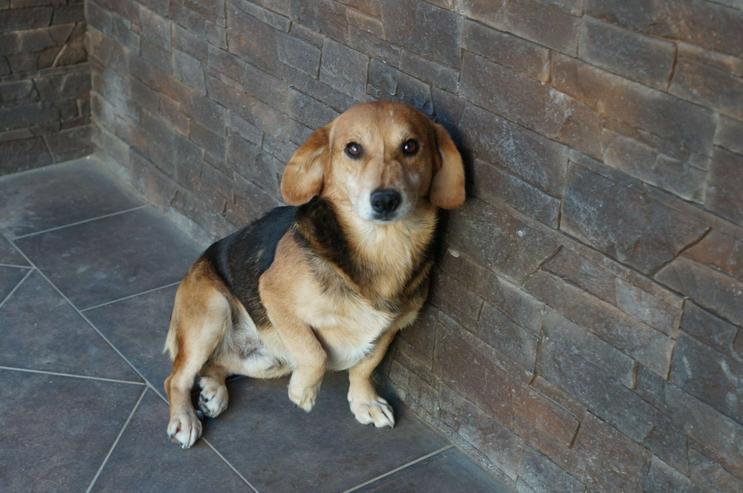 JEREMY, 7 Jahre, Mischling, Rüde, hundeverträglich, katzenverträglich, Tierschutz, lieb, seniorengeeignet