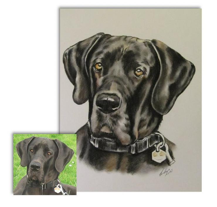 Hunde - Zeichnungen, Tierportraits, Tiermalerei nach Foto