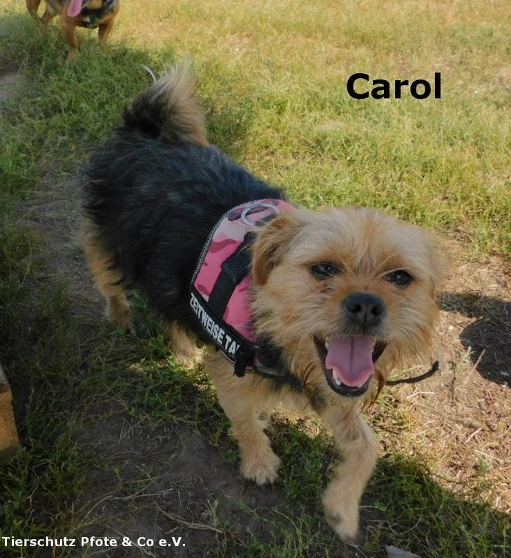 Carol sucht ein zu Hause