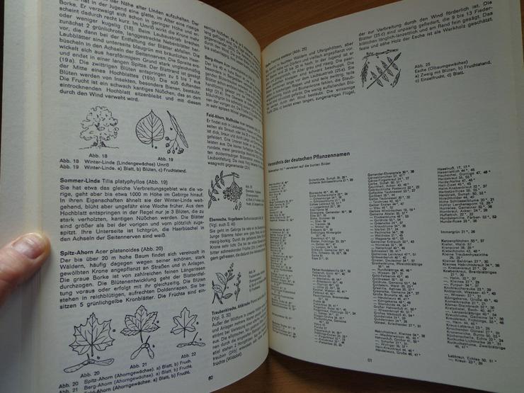 """Bild 8: Sammelbilder-Album """"Blumen am Wege"""", HERBA-Verlag, Neuzustand"""