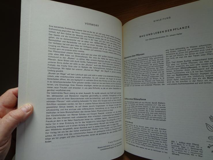 """Sammelbilder-Album """"Blumen am Wege"""", HERBA-Verlag, Neuzustand - Weitere - Bild 6"""