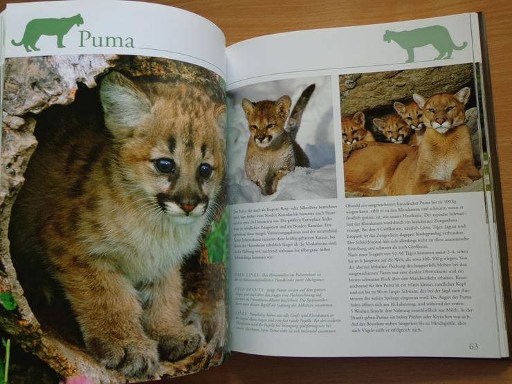 """Bild 12: Großbildband """"Tierkinder im Zoo"""", von Prof. Dr. Henning Wiesner, BLV-Verlag, NEU"""