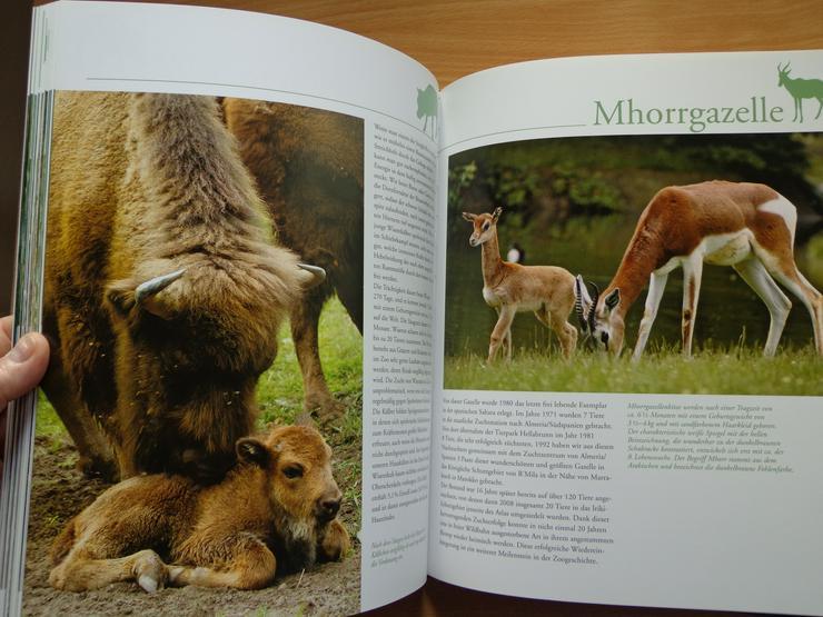 """Bild 16: Großbildband """"Tierkinder im Zoo"""", von Prof. Dr. Henning Wiesner, BLV-Verlag, NEU"""