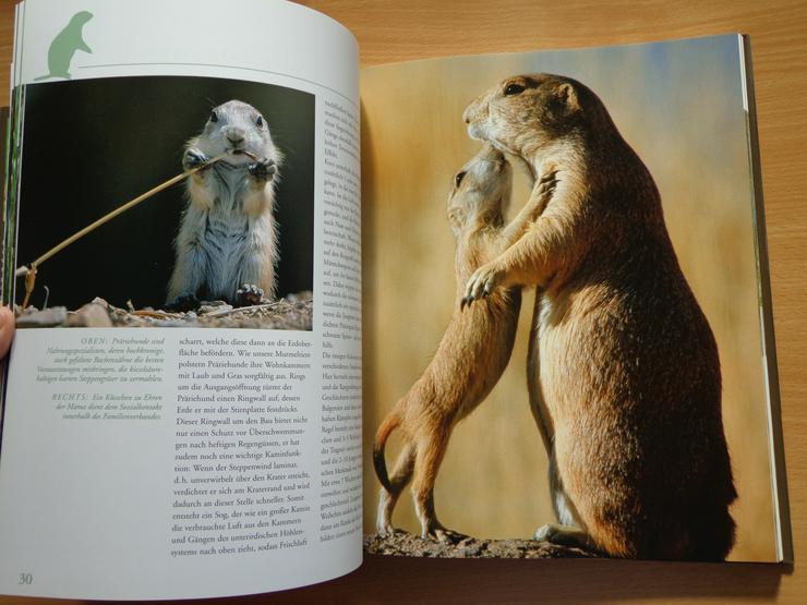 """Bild 7: Großbildband """"Tierkinder im Zoo"""", von Prof. Dr. Henning Wiesner, BLV-Verlag, NEU"""