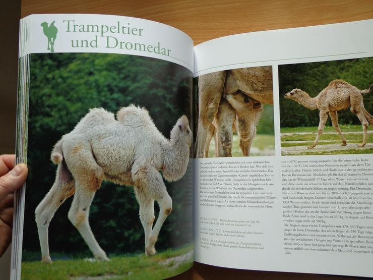 """Bild 15: Großbildband """"Tierkinder im Zoo"""", von Prof. Dr. Henning Wiesner, BLV-Verlag, NEU"""