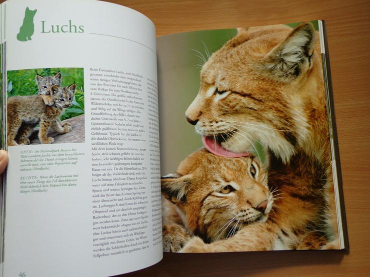 """Bild 9: Großbildband """"Tierkinder im Zoo"""", von Prof. Dr. Henning Wiesner, BLV-Verlag, NEU"""