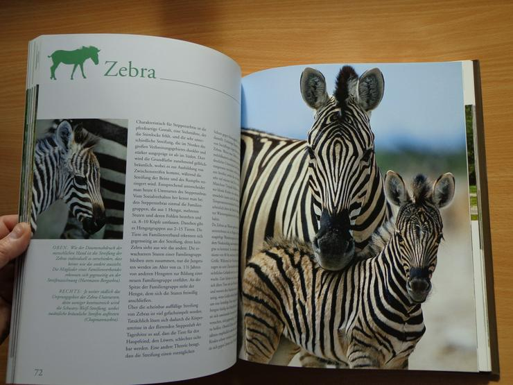 """Bild 14: Großbildband """"Tierkinder im Zoo"""", von Prof. Dr. Henning Wiesner, BLV-Verlag, NEU"""